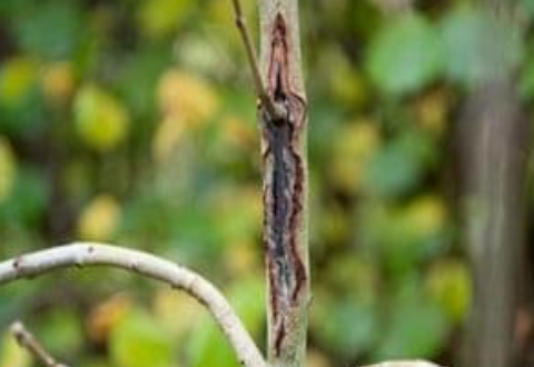 Ash dieback: Forestry companies blame 'chaotic' import system ...